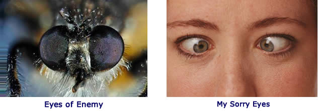 Fly eyes and human eyes
