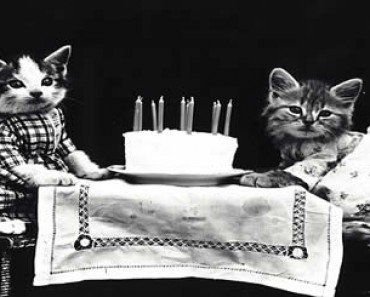 birthday cats
