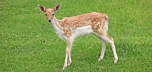 Bambi Arrested And Charged As Peeping Tom