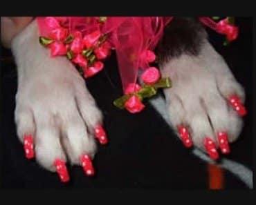 Nail Polish For Pets