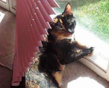 Cat Behind Window Blinds