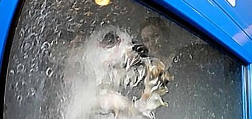 Stupid Pet Idea – Dog-O-Matic Washing Machine