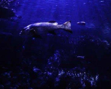 Ocean Underwater