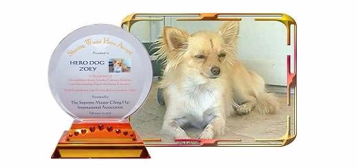 Zoey – Little Dog…. Huge Hero!