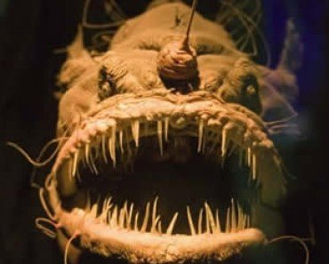 Scary Ocean Fish