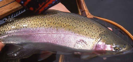 Economic Benefits of Freshwater Fishing Growing Across British Columbia