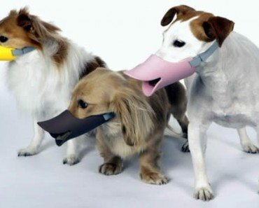 Oppo Dog Muzzle
