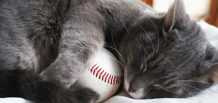 Cat All Set To Throw Ceremonial First Pitch At Baseball Game