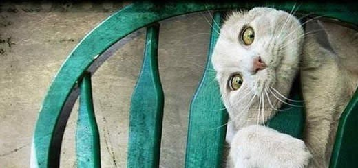 The Most Unexpected Places To Find Your Cat Stuck In [PICTURES]