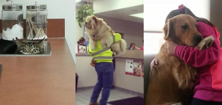 Dogs And Cats Who Do Not Want To Go To The Vet [PICTURES]