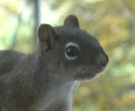 Pecker is our resident squirrel