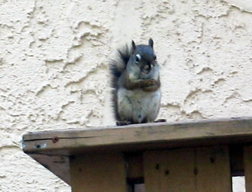 Squirrel with attitude