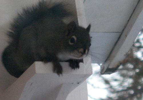 Squirrel with attitude