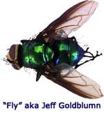 Buzzing Fly