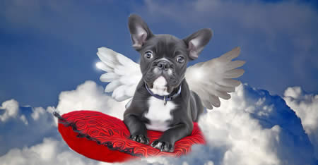 Heaven Bulldog Angel With Wings On Clouds