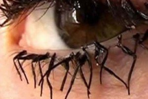 Flylashes Are Made Out Of Fly Legs