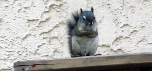 funny squirrel
