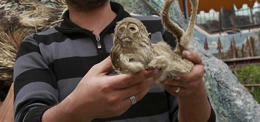 Gaza's Khan Younis Zoo