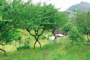 Peter Planted A Pooktre | A Pooktre Peter Planted | Tree Art