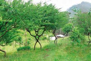 Peter Planted A Pooktre | A Pooktre Peter Planted | Tree Art