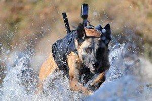 The Dog That Took Osama Bin Laden Down