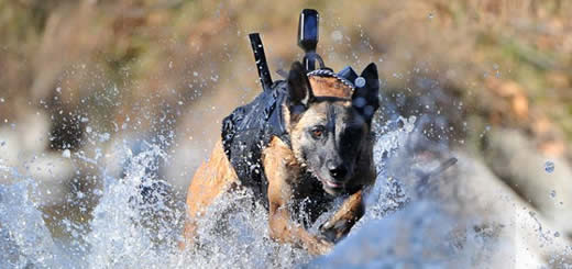 Cairo Hero Dog