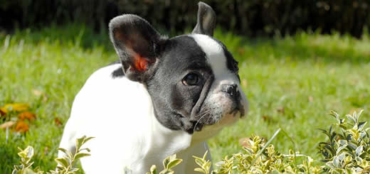 Cute Black and White Puppy