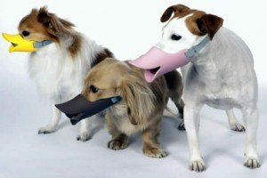Muzzle Your Mut With Oppo Dog Muzzle | It Will Go Quackers Over It
