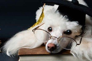 University Degrees So Easy A Dog Can Earn Them