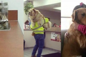 Animals That Do Not Want To Go To The Vet