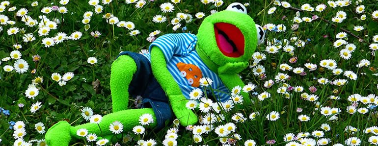 kermit relaxing