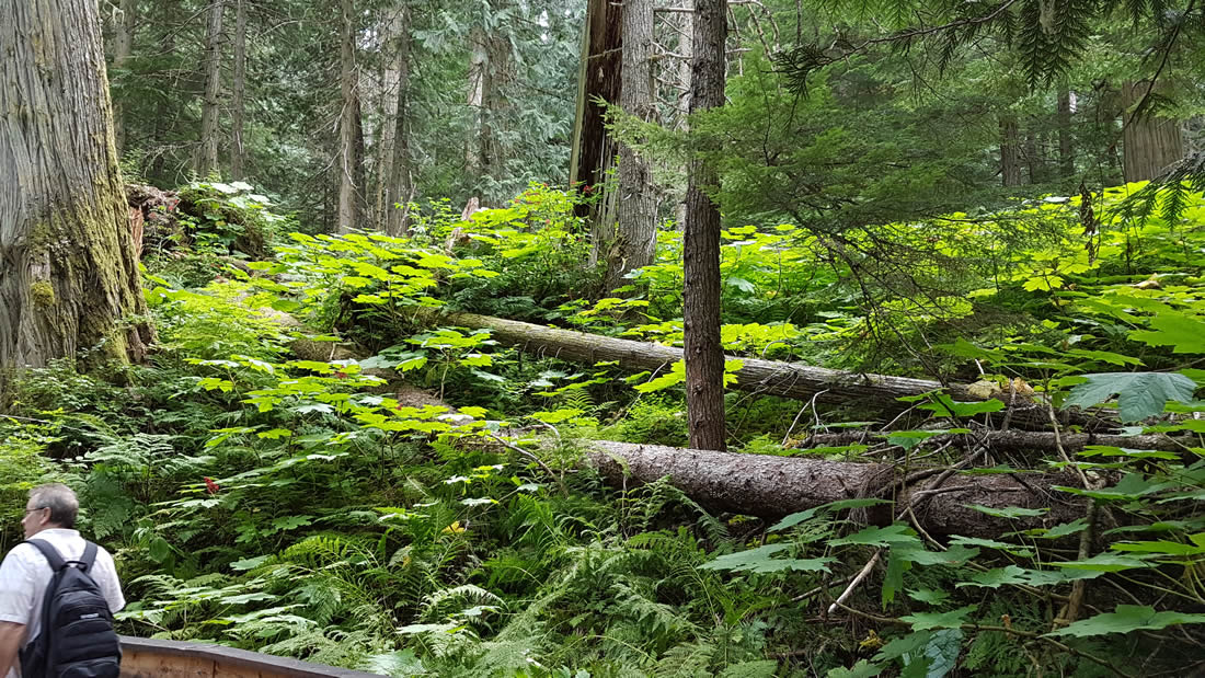 ancient-forest-prince-george-british-columbia-011
