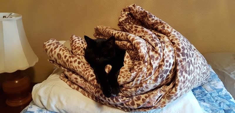 cat-sleeping-funny