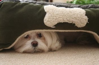 Funny Dog Hiding